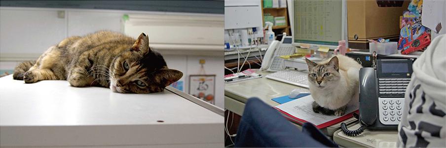 社内の猫たち